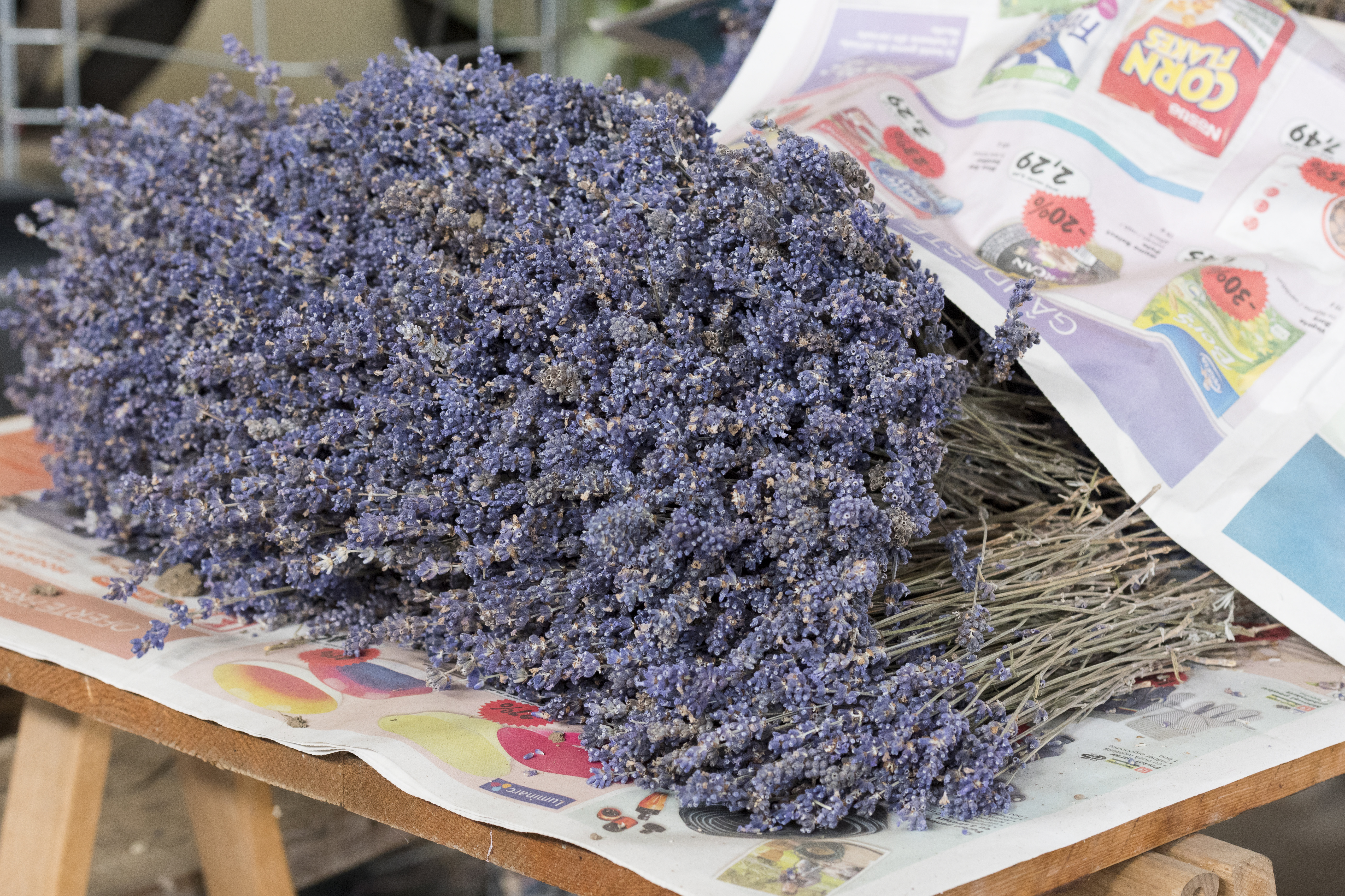 Rumänien/Sverige: Export av lavendelolja hjälper utsatta romer